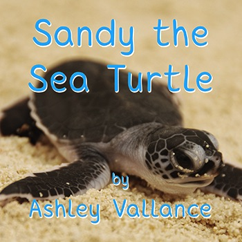 Sandy the Sea Turtle Cover